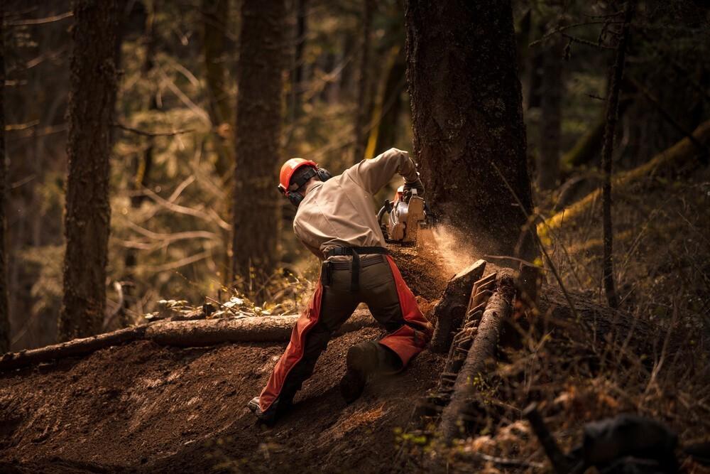 Tree Removal Service Company