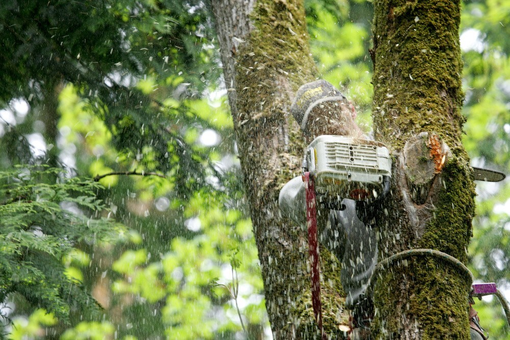 Tree Services You Should Know About