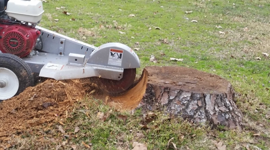 Image result for Stump Removal