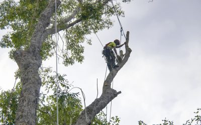How Much Will My Tree Removal Cost