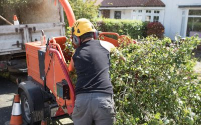 Tree Removal: Essential Tips