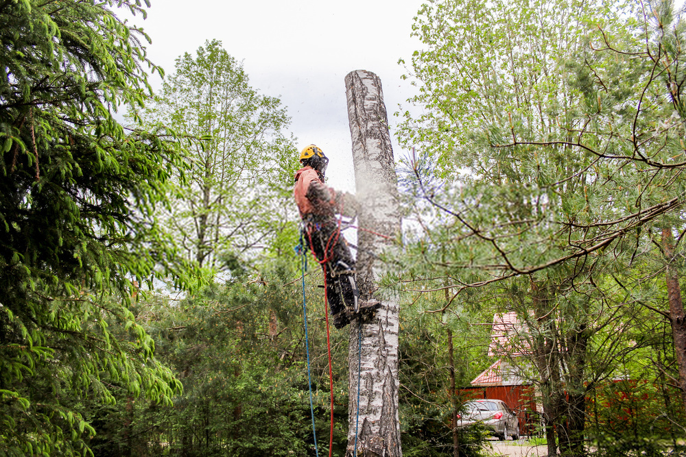 Professional Tree Care Service – Are You Experiencing Problems With Your Trees