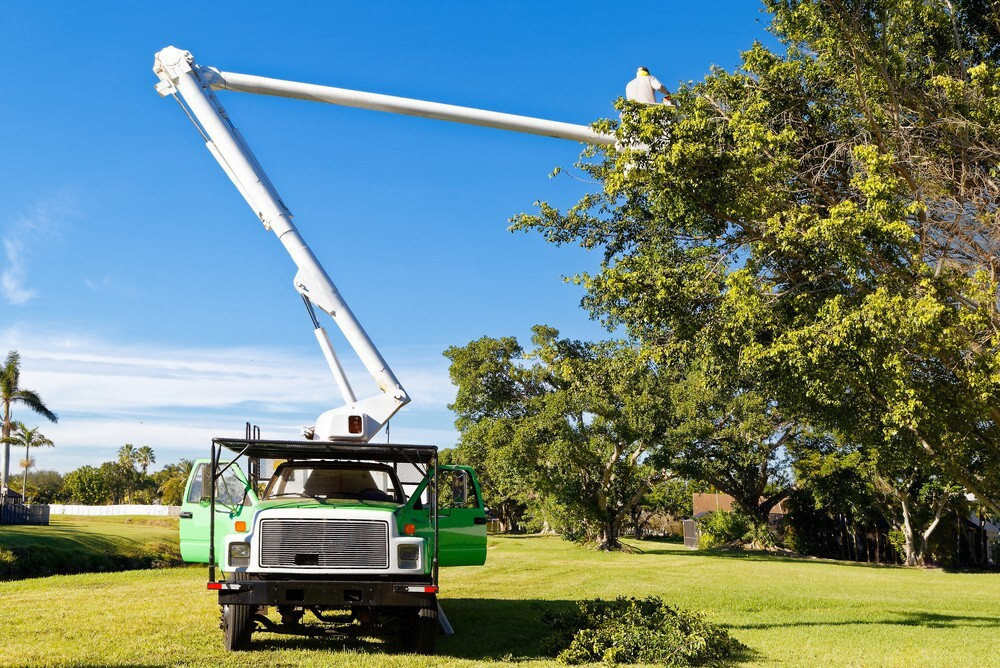 Importance of Tree Care Service
