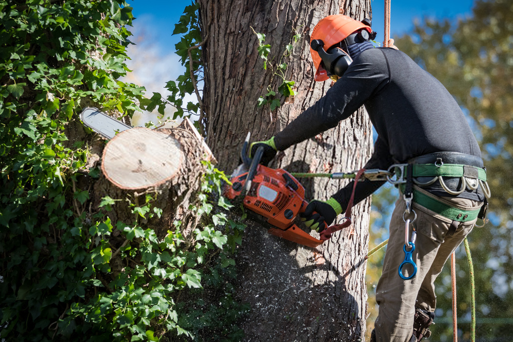 Tree Service Professionals Is Your Best Option For Safe Ball Moss Removal