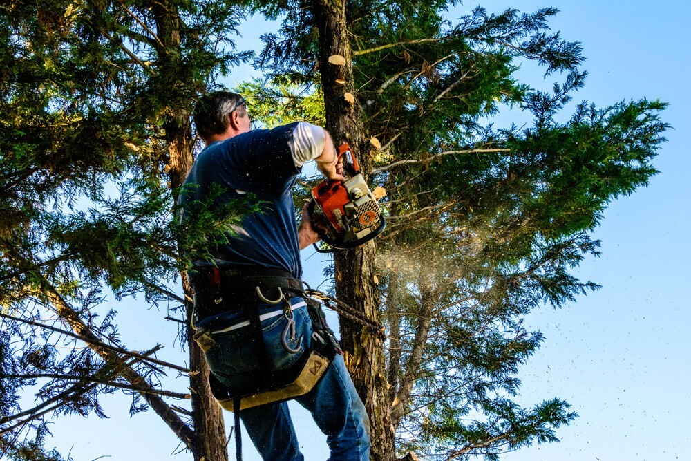 How To Remove Ball Molds From Your Trees